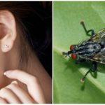 Une mouche dans l'oreille