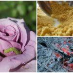 Remèdes populaires contre les chenilles