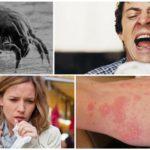 Réaction à la présence d'acariens