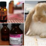 Méthodes populaires de traitement des acariens