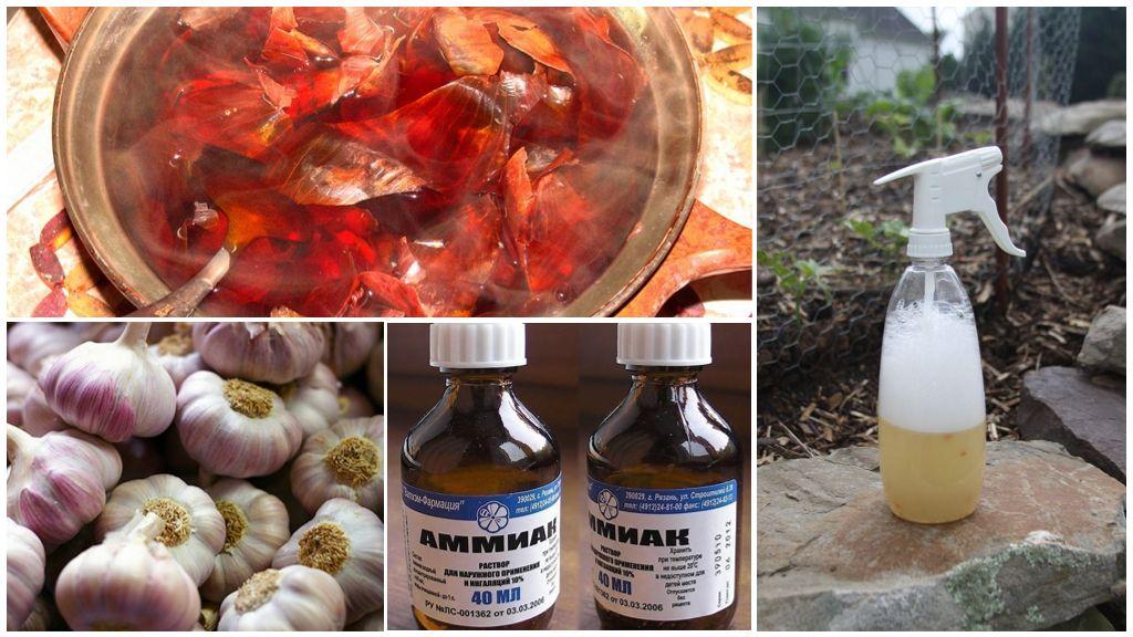 Remèdes populaires dans la lutte contre les tiques