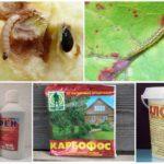 Méthodes chimiques pour la destruction des chenilles