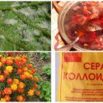 Méthodes traditionnelles de lutte contre les acariens