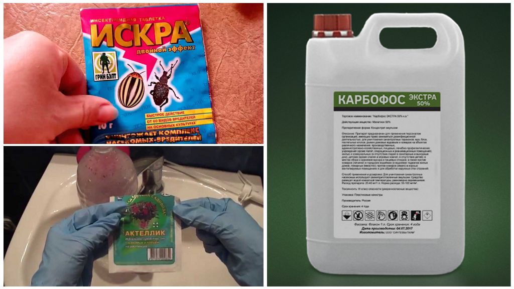 Méthodes chimiques de lutte contre la mouche de la framboise
