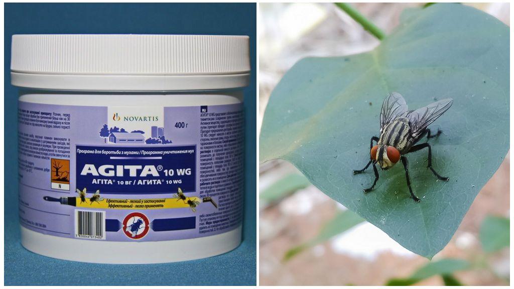 L'utilisation d'Agita des mouches