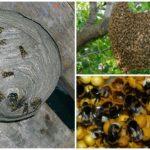 Nids d'insectes