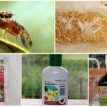 Produits chimiques pour lutter contre la mouche du melon