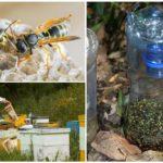 Piège à guêpes dans le rucher