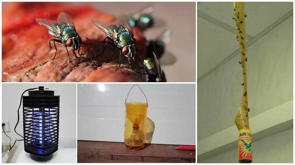 Méthodes mécaniques de lutte contre les insectes