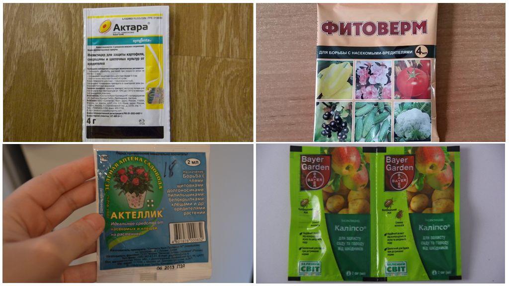 Pesticides contre la mouche à l'oignon