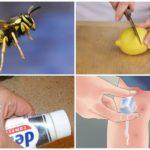 Remèdes populaires contre les piqûres d'insectes
