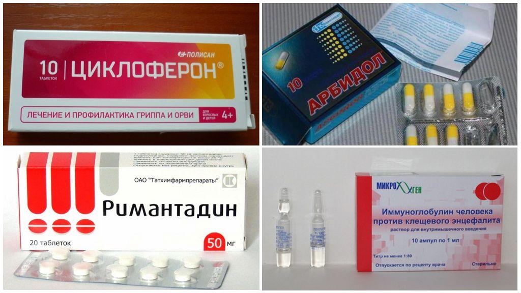 Médicaments prescrits après une morsure de tique