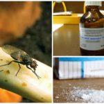 Recettes populaires pour traiter avec la mouche de l'oignon