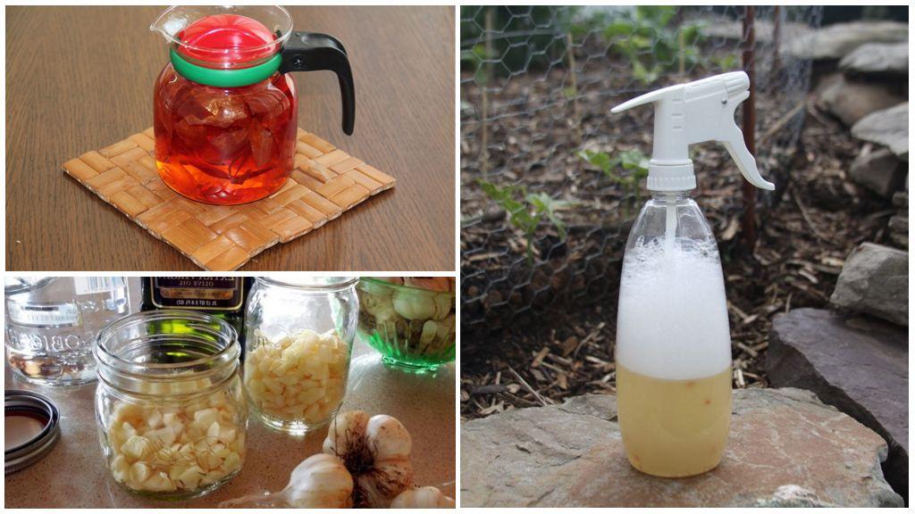 Façons traditionnelles de traiter les acariens sur une rose