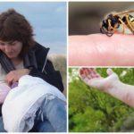 Danger de piqûre de guêpe pendant l'allaitement