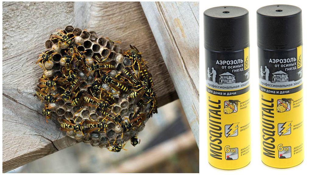Aérosol pour moustiques provenant de guêpes et de nids de guêpes