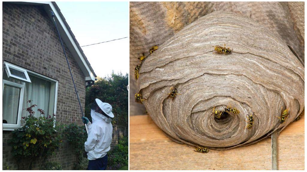 Détruire les nids de guêpes