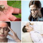 Allergique à mordre morsure d'araignée