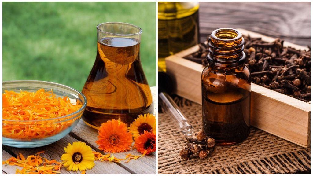 Calendula et huile de girofle de Giardia