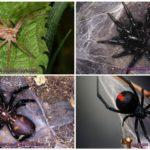 Les araignées les plus effrayantes