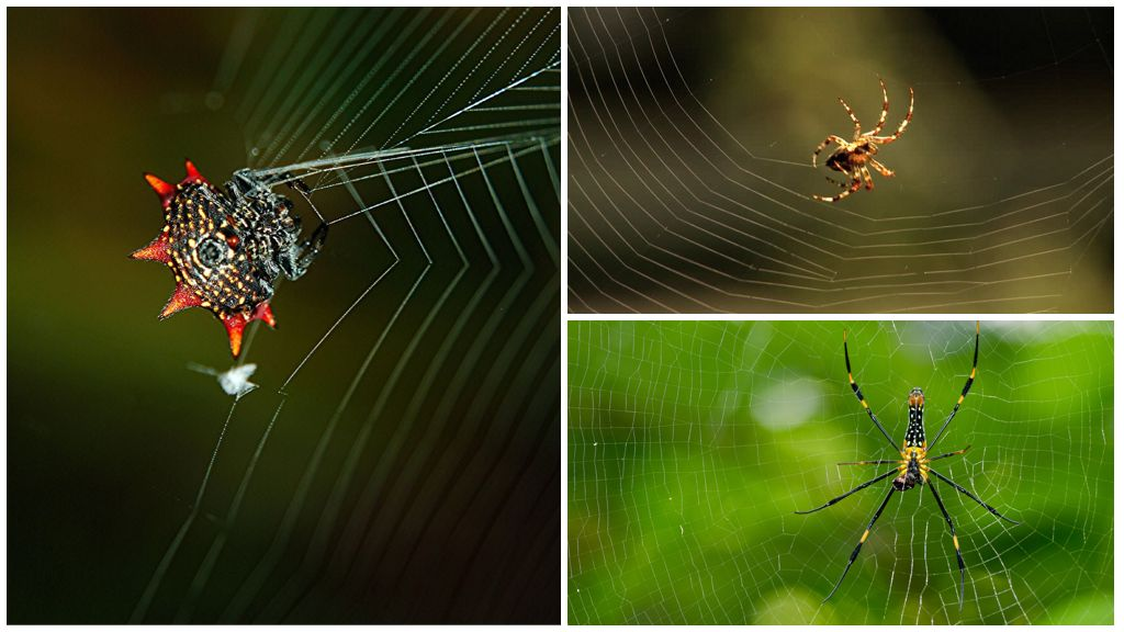 L'araignée tisse une toile