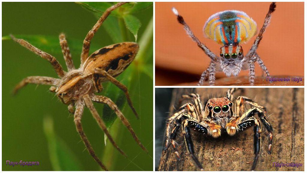 Types d'araignées sûres