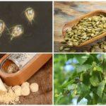 Remèdes populaires pour lutter contre la giardiase