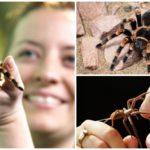 Peur et araignées