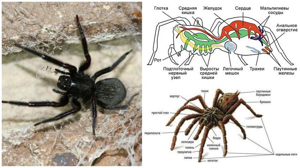 Structure araignée